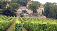 Aarhus Ø's vinimport søger investor